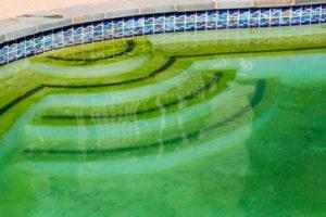Средства для чистки воды в дачном бассейне