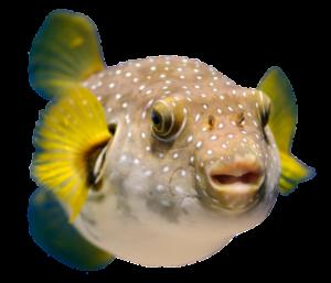 Суши с рыбой фуга